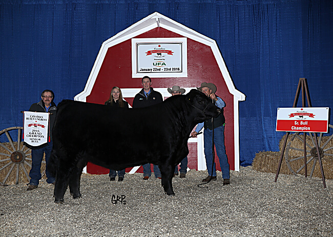 Sr. Bull Champion - MJT Cattle Company 2017