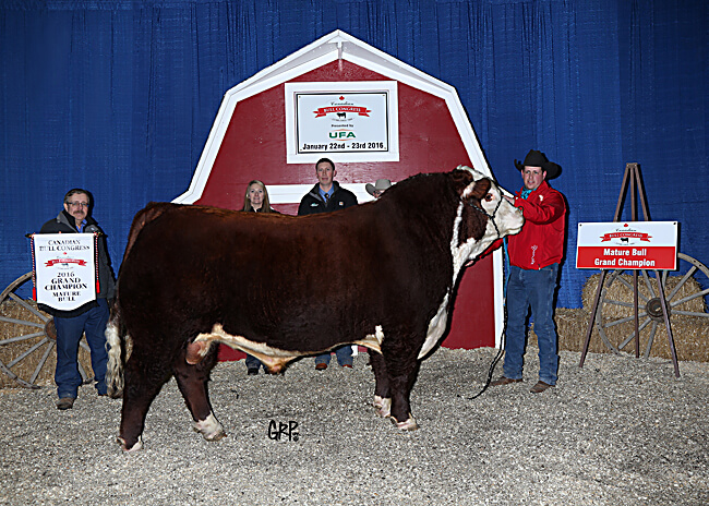Mature Bull Champion - Glenrose Polled Herefords and Angus 2017