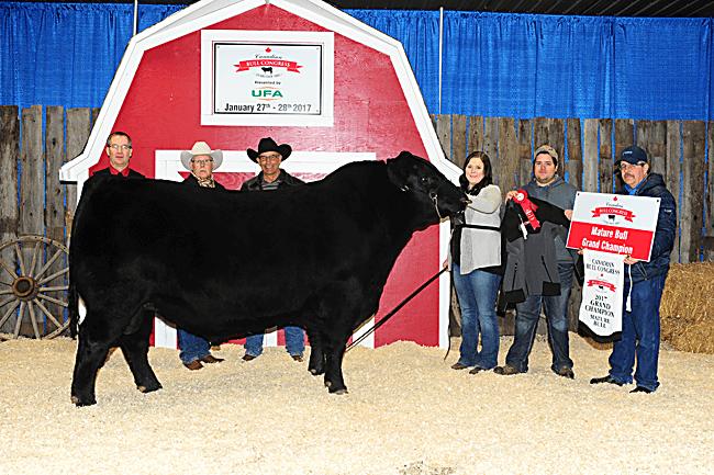 Mature Bull Champion - Richmond Ranch 2017