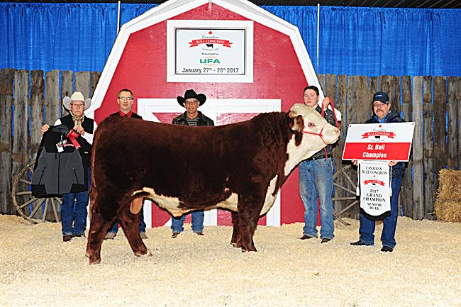Sr. Bull Champion - SS Cattle Co. 2017