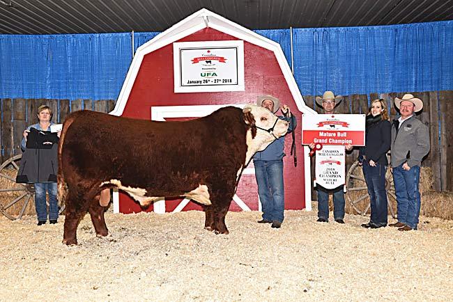 Mature Bull Champion - SS Cattle Co. 2018