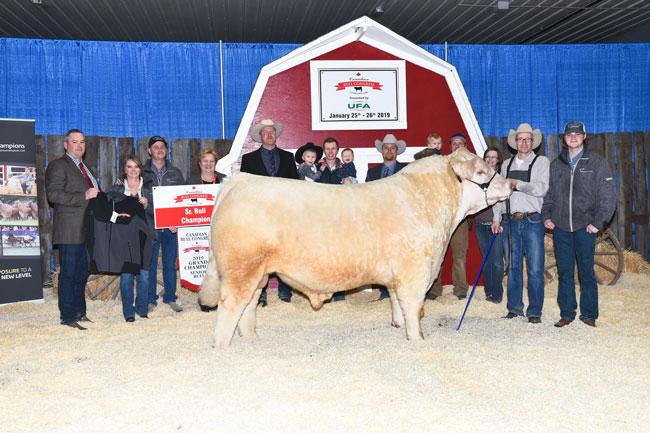Senior Bull Grand Champion – Vikse Family Farm 2020