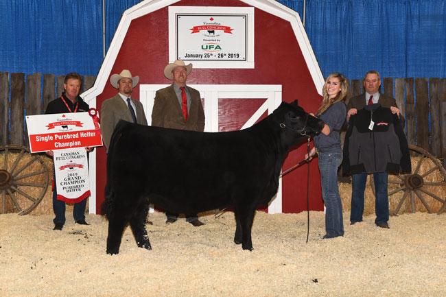 Single Purebred Heifer Grand Champion – Miller Wilson Angus 2020