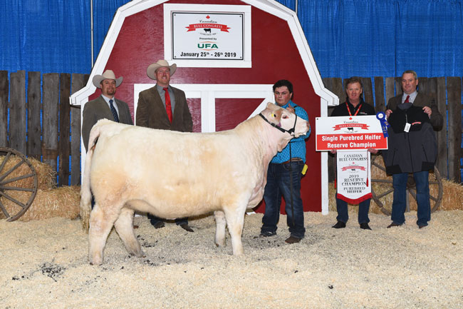 Single Purebred Heifer Reserve Champion – Tyler Young