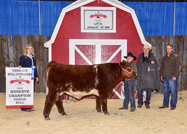 Jr. Bull Reserve Champion 2020