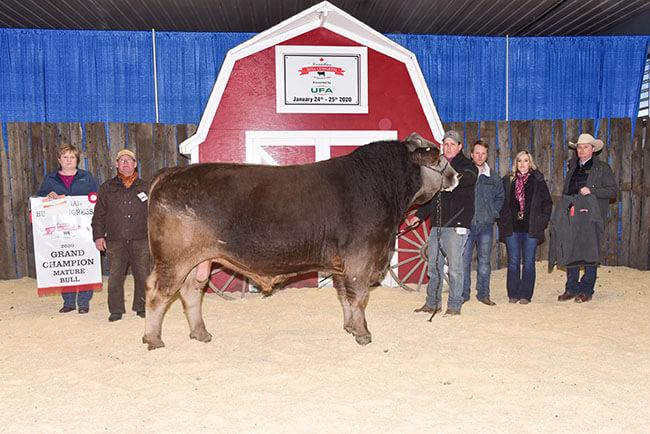 Mature Bull Grand Champion 2020