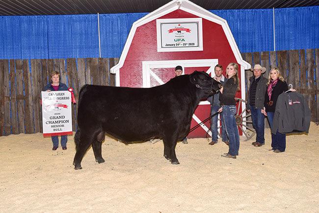 Senior Bull Grand Champion 2020