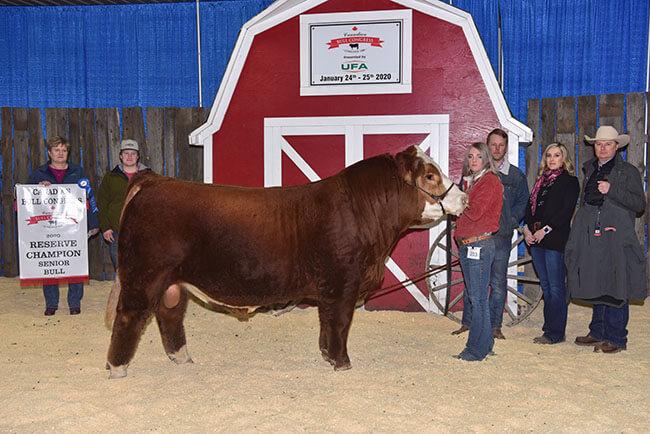 Senior Bull Reserve Champion 2020